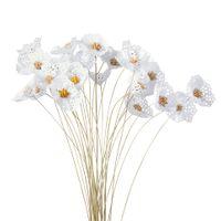 Bellis bouquet