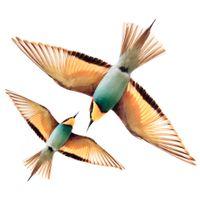 Flying bird adesivo c/2 25 cm x 30 cm